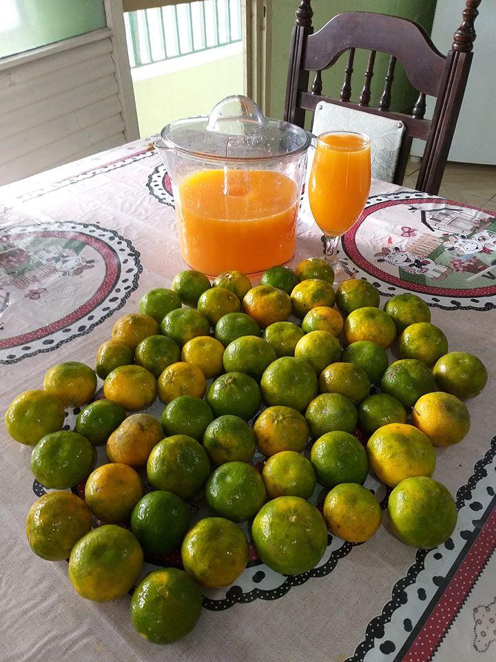 Suco de tangerina simples de fazer